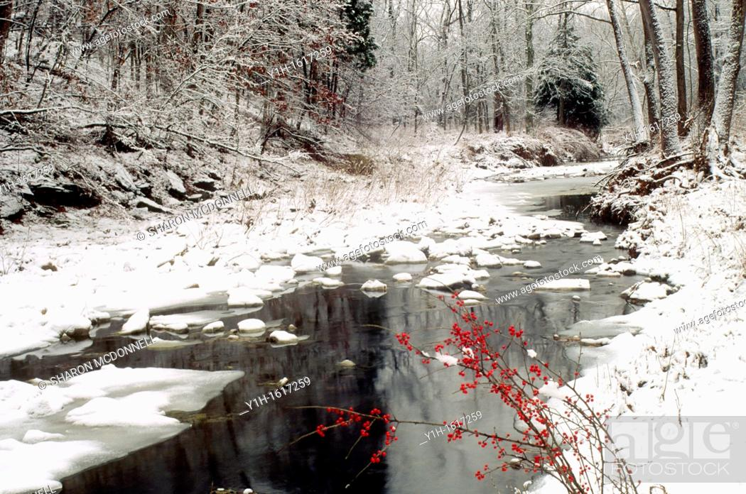Stock Photo: Grindstone creek in winter with American holly berries add a touch of red, Missouri USA.