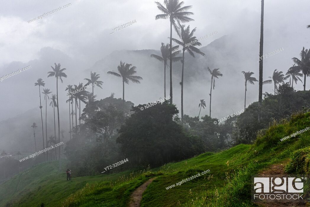 Imagen: The Cocora Valley (Spanish: Valle de Cocora) is a valley in the department of Quindâ. šo, just outside the pretty little town of Salento.