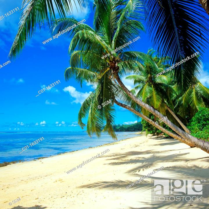 Stock Photo: Beach with palm trees, Mahé island, Seychelles.