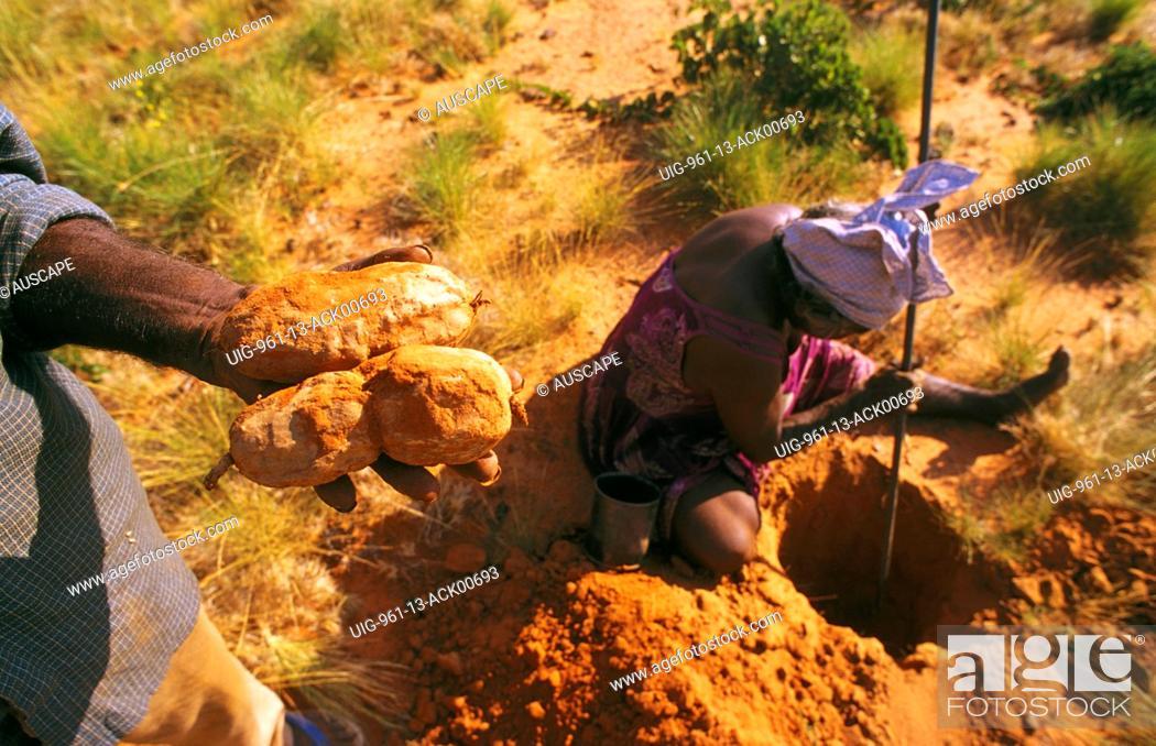 Stock Photo: Aboriginal people of Balgo collecting karnti or bush potato Balgo / Wirrimanu, Western Australia.