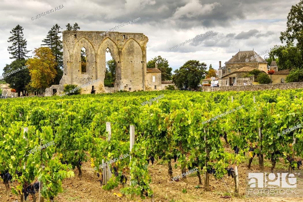 Imagen: Vineyards. Ruins of Les Cordeliers church. Saint-Emilion Bordeaux wine region. Aquitaine Region, Gironde Department. France Europe.