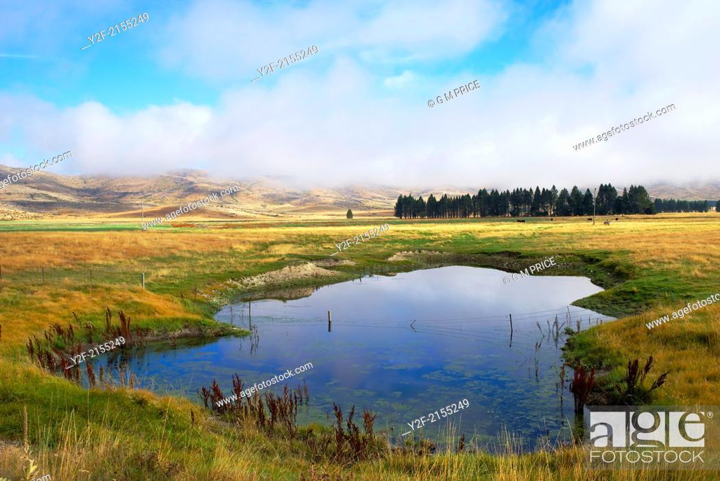 Imagen: pond in grazing land near Lake Tekapo, New Zealand.