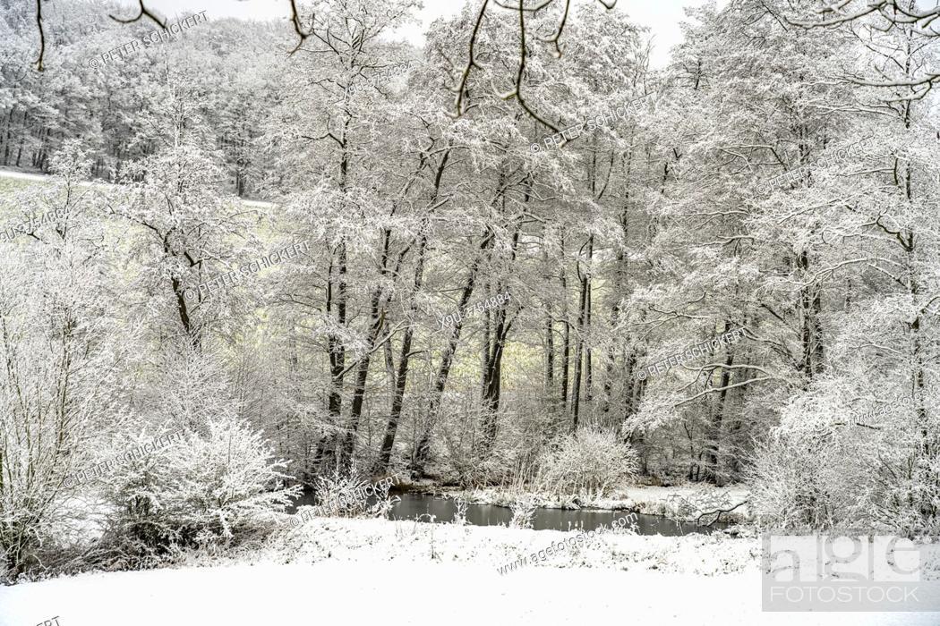 Stock Photo: Verschneite Winterlandschaft im Sauerland, Sundern, Hochsauerlandkreis, Nordrhein-Westfalen | Snowy winter landscape in Sundern, Hochsauerland district.