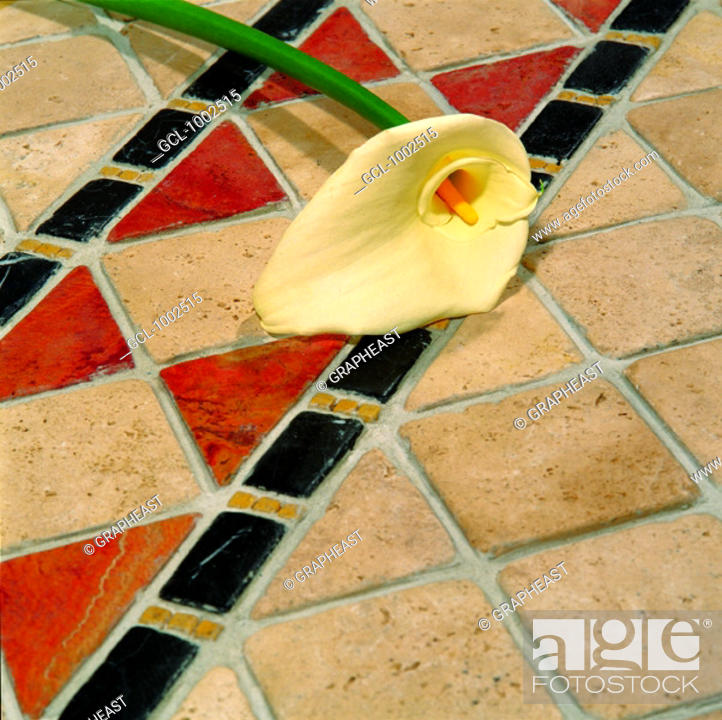 Stock Photo: Single Calla Lily lying on tiled floor.