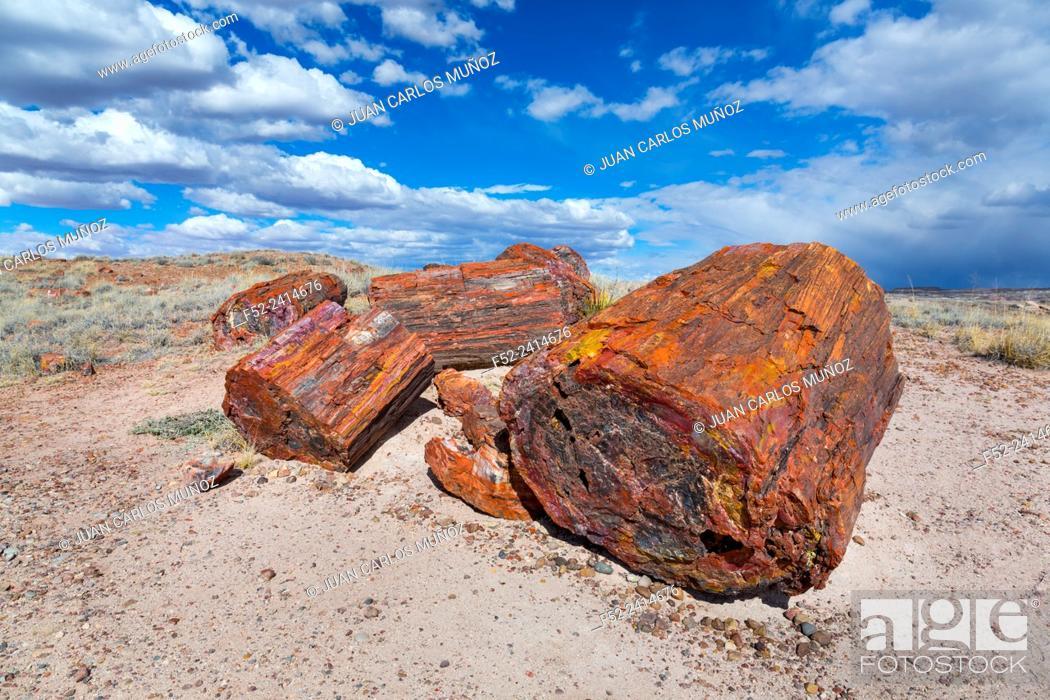 Stock Photo: Petrified wood, Petrified Forest National Park, Arizona, USA, America.