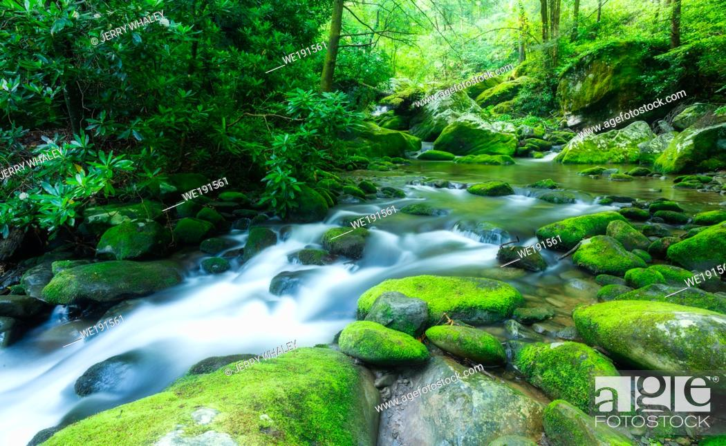 Stock Photo: Late Spring along the Roaring Fork, a stream in the Great Smoky Mountains.