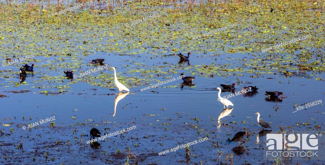 Stock Photo: Mamukala birds in wetlands. Mamukala wetlands. Kakadu National Park. Northern Territory. Australia.