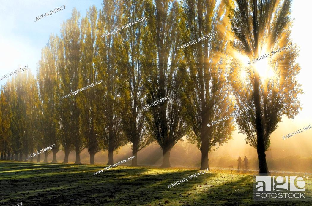 Stock Photo: Joggers and dogs with sunrise through fog and trees, Godbeams Burnaby Lake Regional Park, Burnaby, British Columbia, Canada.