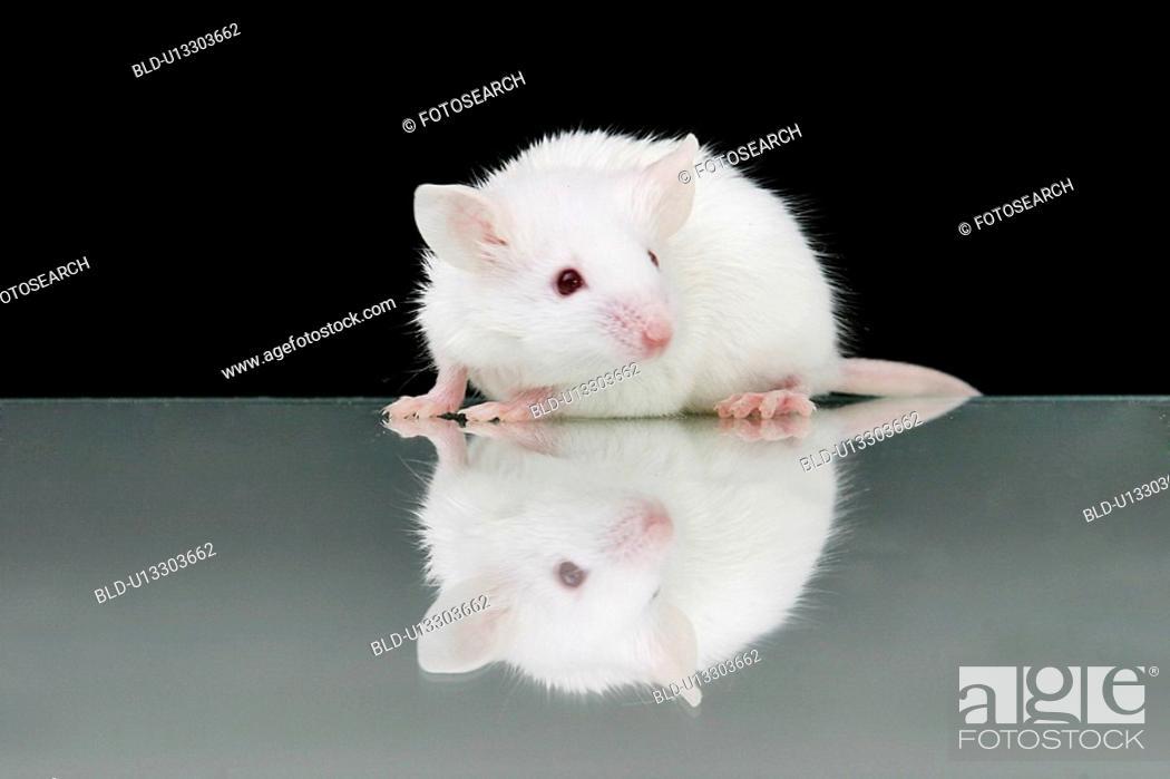 Stock Photo: animals, close-up, CLOSE, black, alfred.