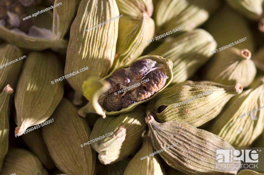 Stock Photo: High angle view of Cardamoms.
