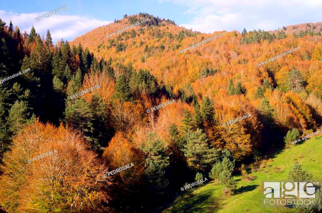 Stock Photo: autumn forest Irati and sky with clouds.