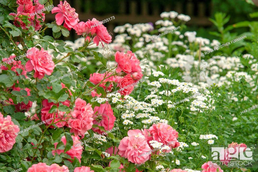 Bild Roha Fotothek Foto Blume Blumen Bluete Blüte Blueten