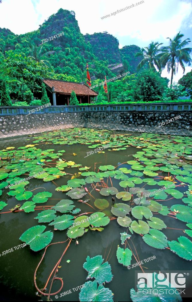 Imagen: Lotus pond at Hoa Lu Temple Vietnam.