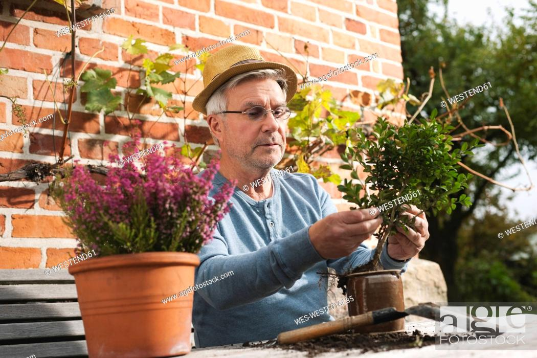 Stock Photo: Germany, Kratzeburg, Senior man doing flower gardening.