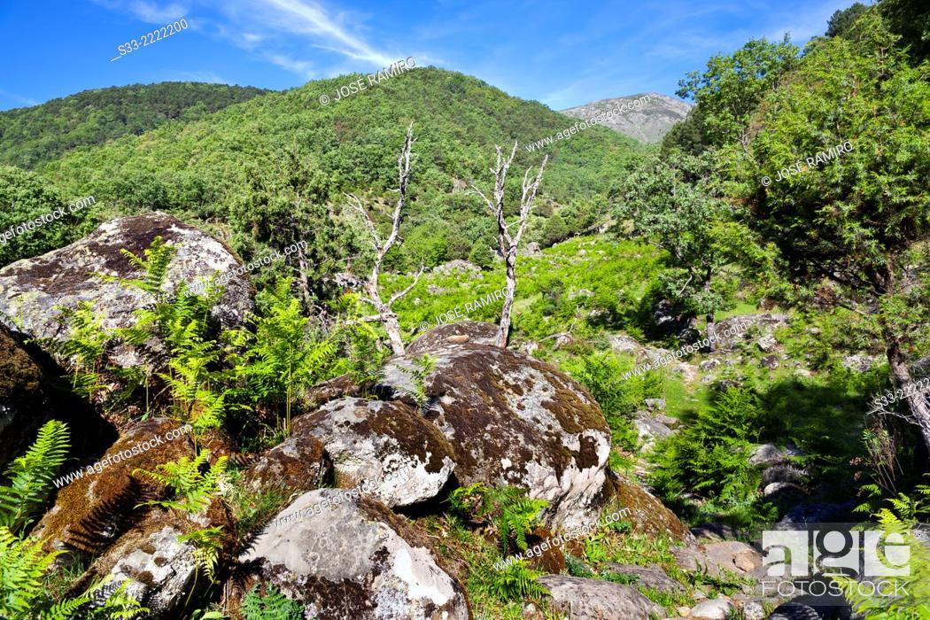 Stock Photo: Vega del Cerezo in the Sierra de Gredos. Candeleda. Avila. Castilla Leon. Spain.