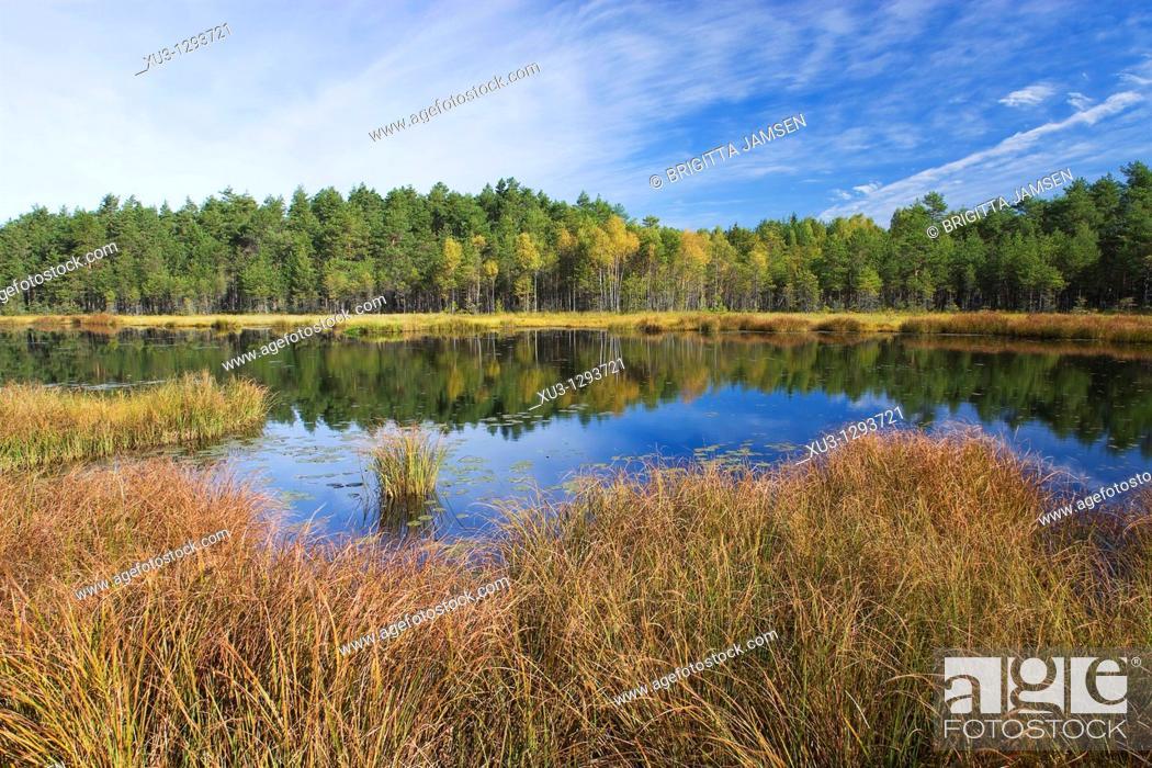 Stock Photo: Fen Lake. Sweden.