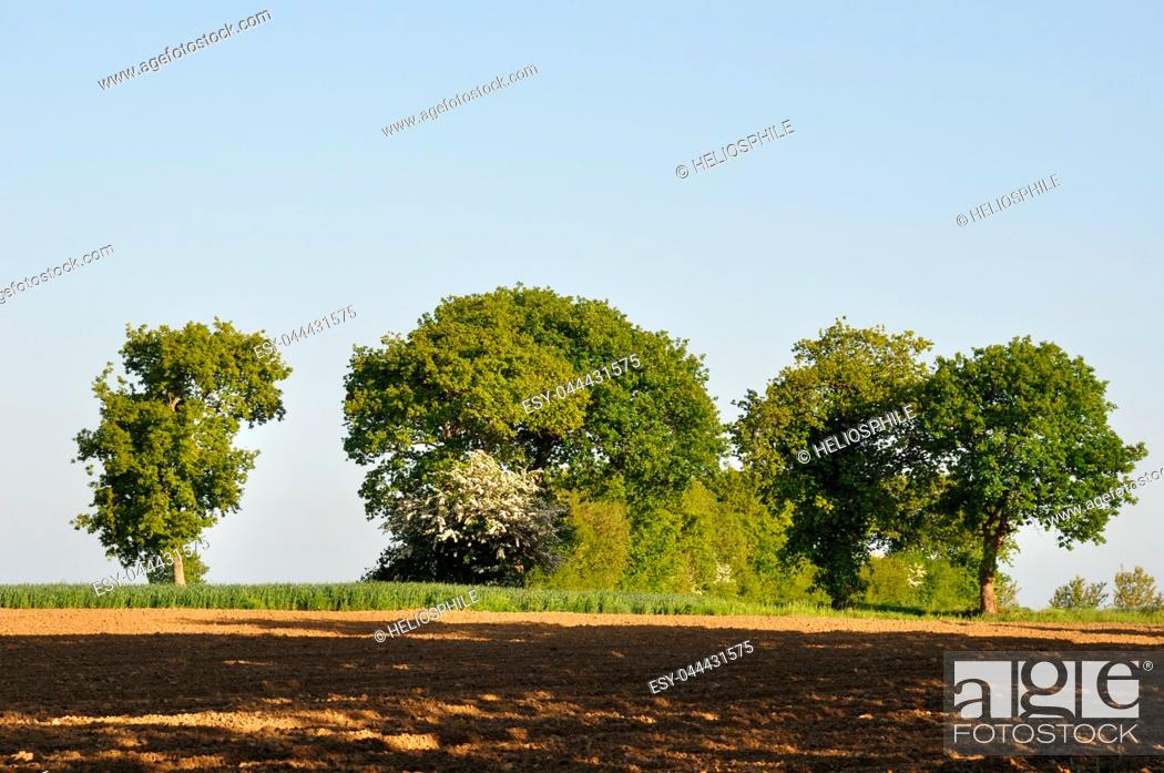 Stock Photo: Tree at spring. Brittany. France.