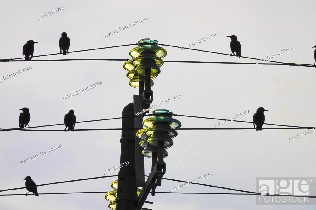Stock Photo: birds on electric cable, Sevilla, Spain.