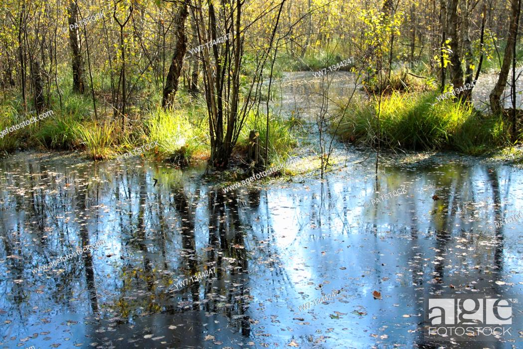 Stock Photo: Swamps in Kampinos National Park, Poland.