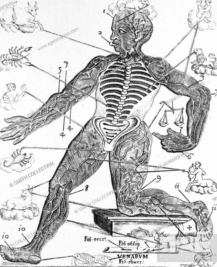 Human figure with the spines and the ribs exposed, also