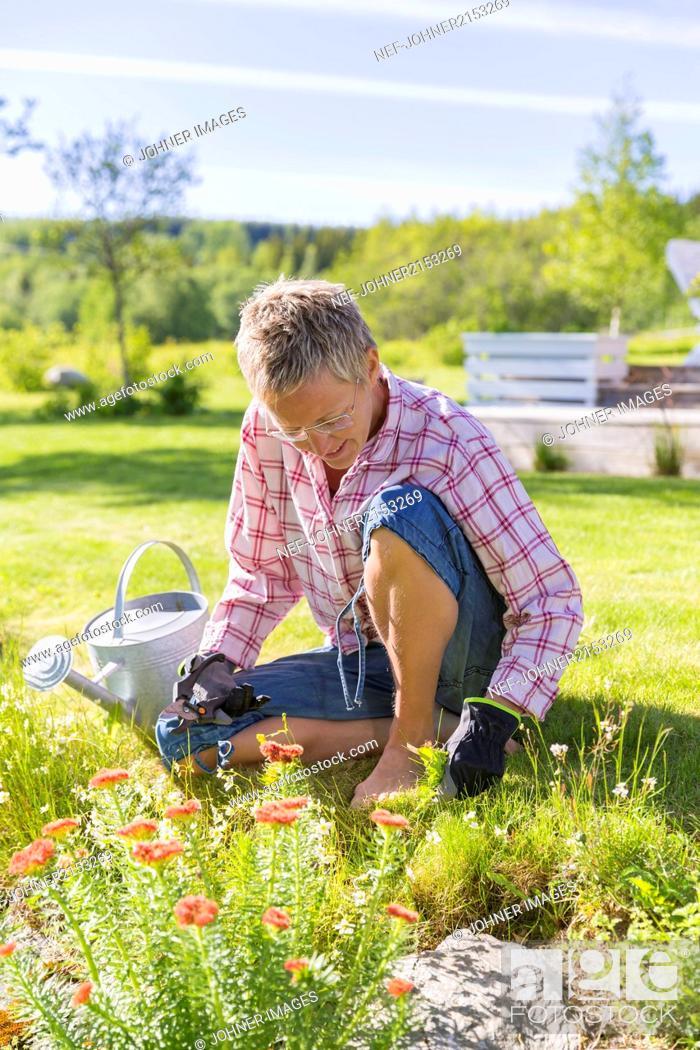 Stock Photo: Mature woman gardening.