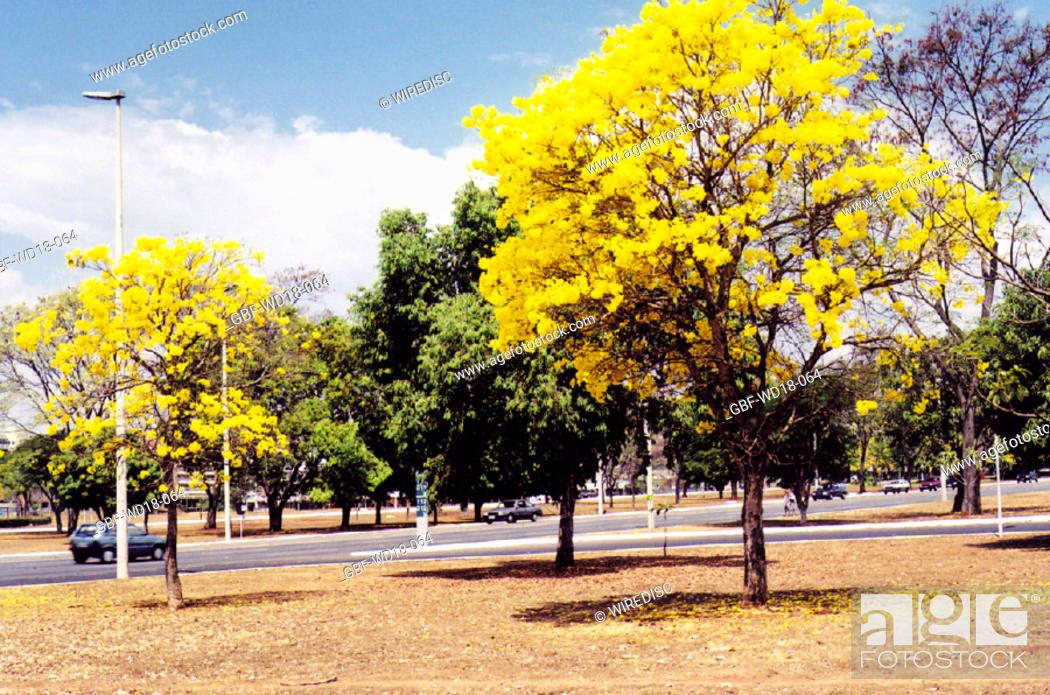 Stock Photo: Travel, Distrito Federal, Brasília, Brasil.