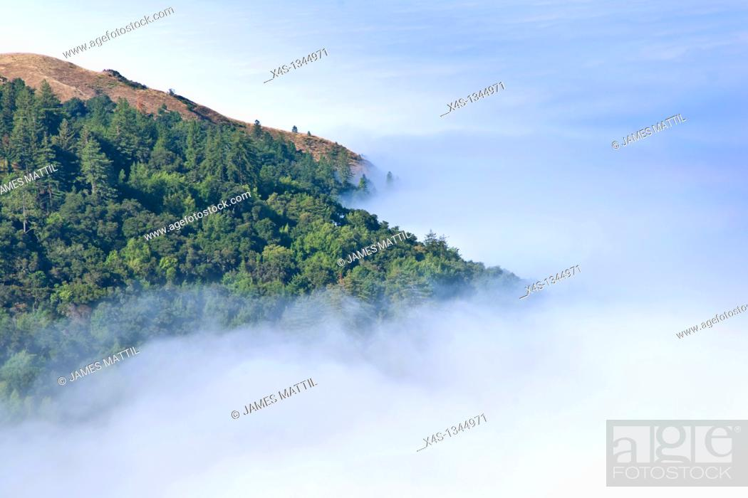 Stock Photo: Morning fog obscures the coast of Big Sur California.