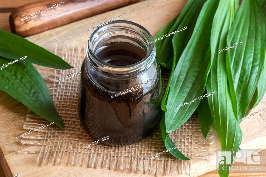 Stock Photo: Homemade ribwort plantain syrup against cough with fresh plant.