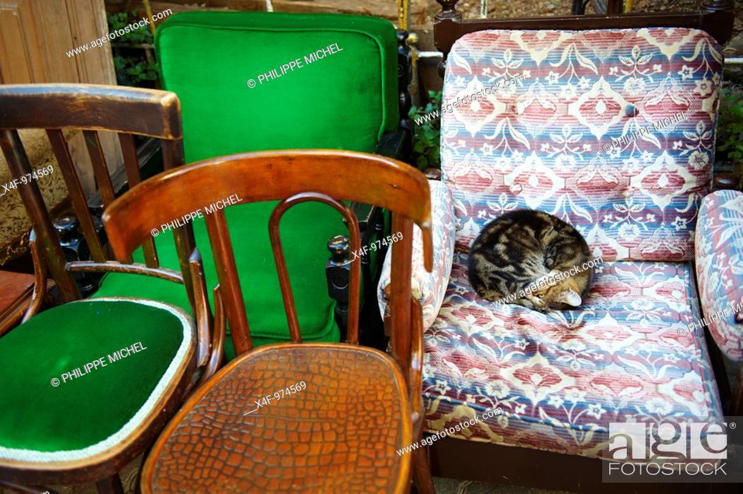 Stock Photo: Cat, Istanbul, Turkey.