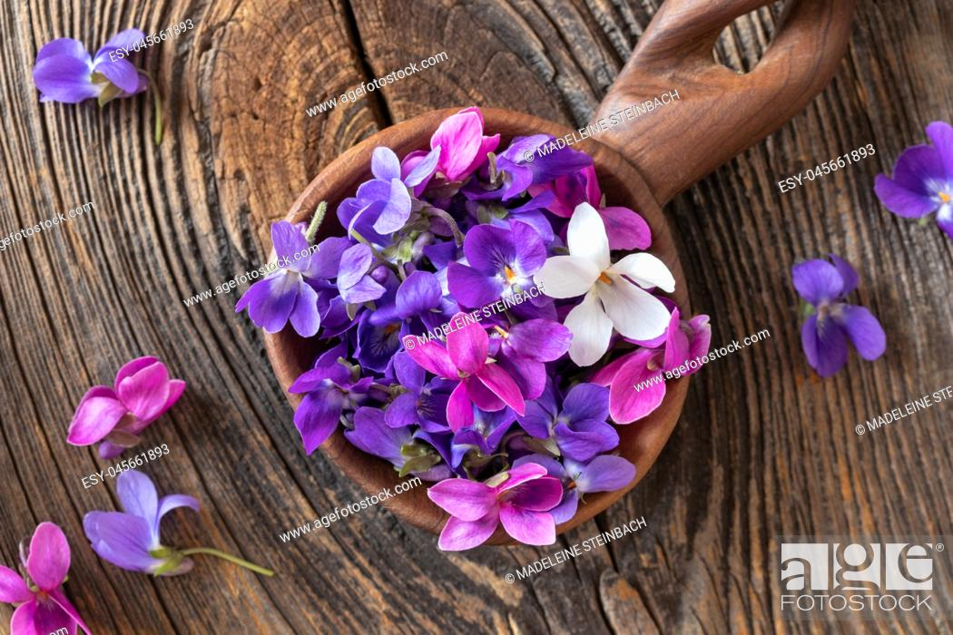Stock Photo: Wood violet flowers on a wooden spoon, top view.