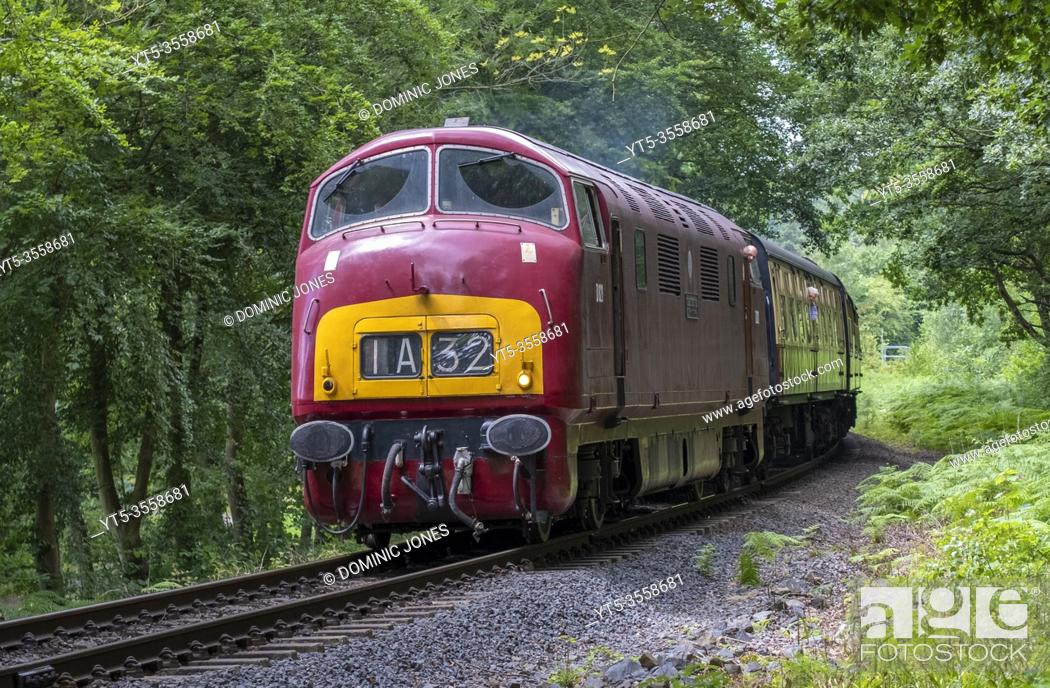 Stock Photo: Warship classs diesel Greyhound heads through Trimpley on the Severn Valley Railway.