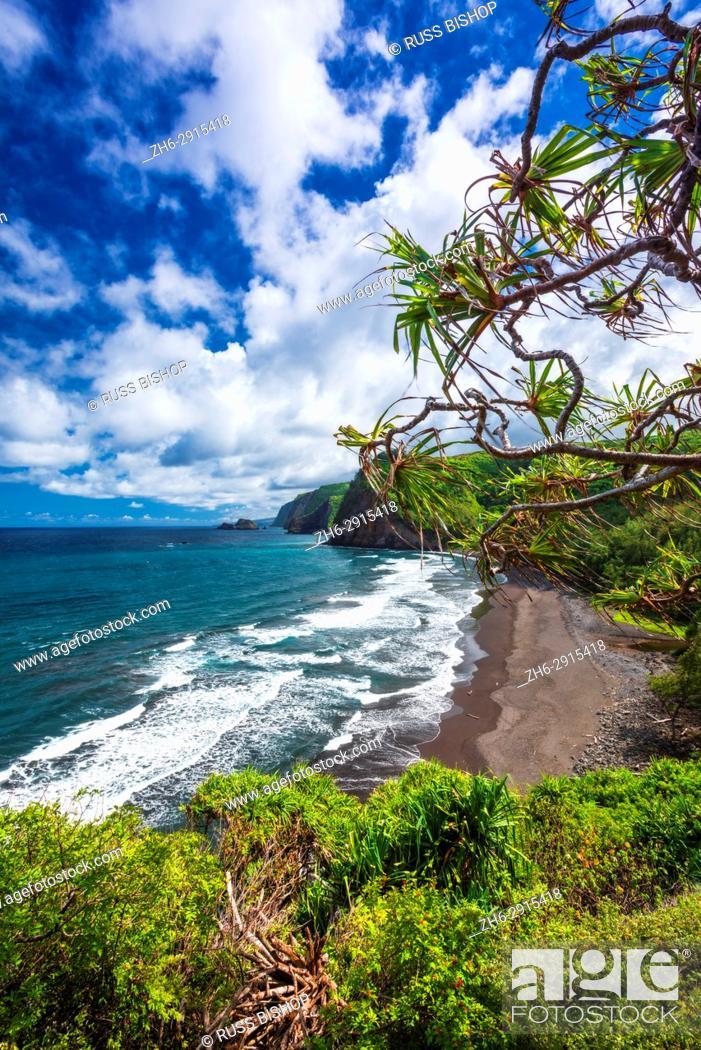 Imagen: Pololu Valley and beach through hala trees, North Kohala, The Big Island, Hawaii USA.