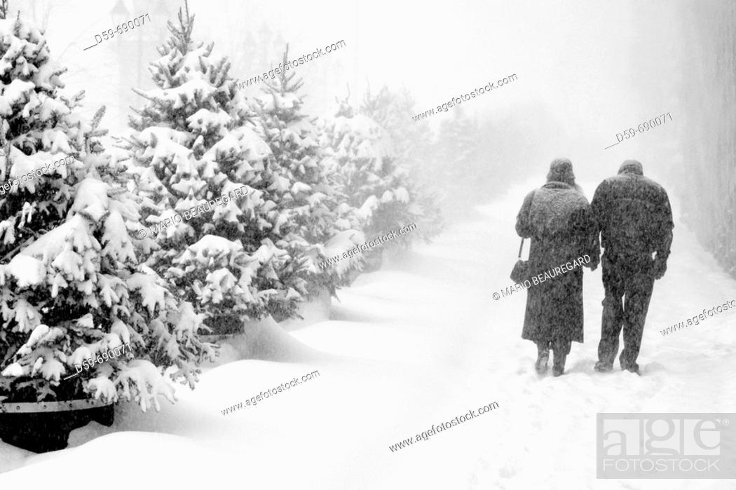 Stock Photo: Couple walking in a winter snow storm, Montreal, Quebec, Canada.