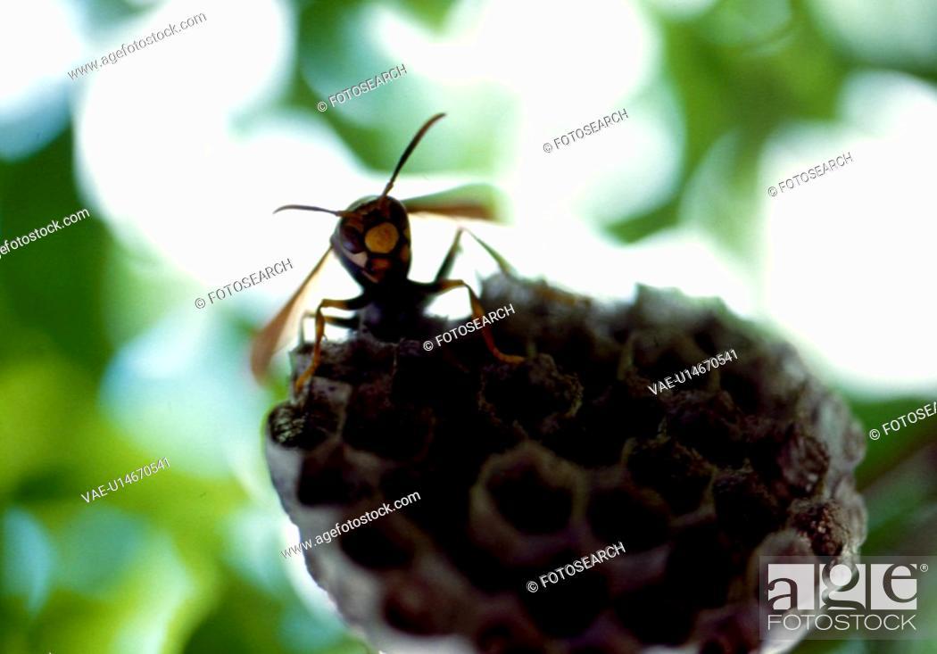 Stock Photo: wasp, nature, beehive, wild, scene, tree, landscape.