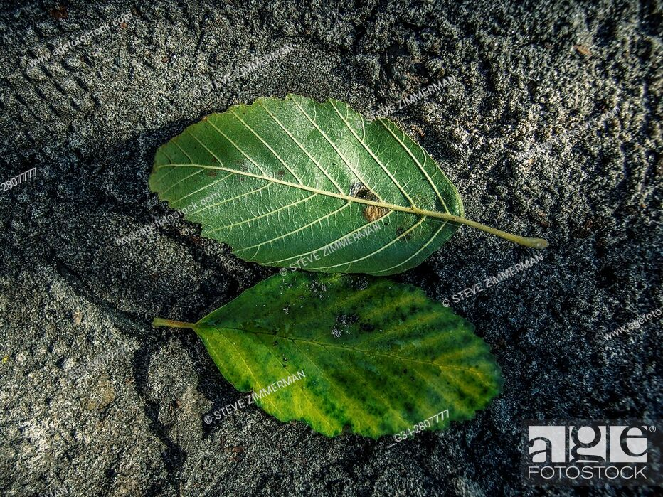 Stock Photo: Leafy Pairing.
