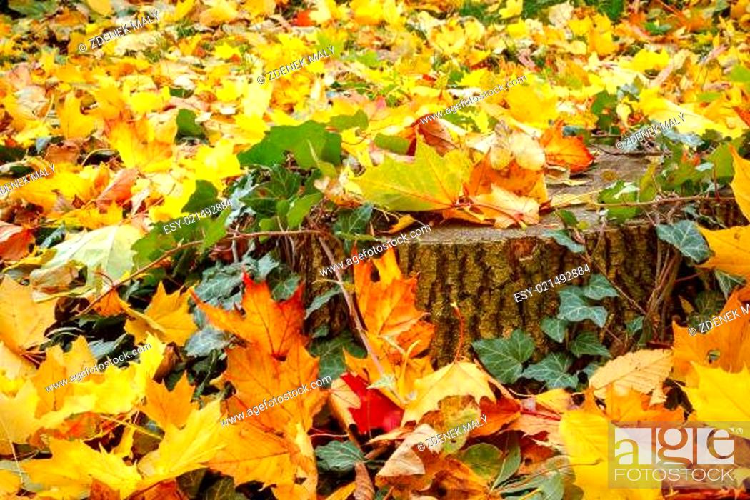 Photo de stock: orange red and green leaves and stump.