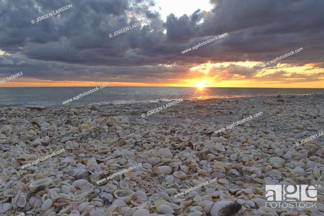 Stock Photo: Sea shells, Sanibel, Florida, USA.