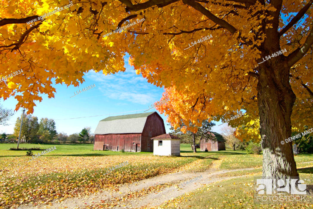 Stock Photo: Northern Indiana, 5 miles southeast of the small city of Elkhart, agriculture farming scene during the autumn fall colors.