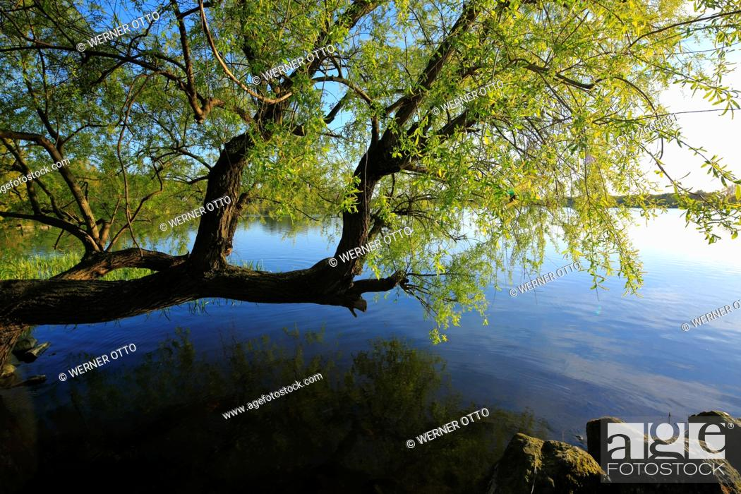Stock Photo: Germany, Nettetal, Maas-Schwalm-Nette Nature Park, Schwalm-Nette Nature Park, Lower Rhine, Rhineland, North Rhine-Westphalia, NRW, Nettetal-Hinsbeck.