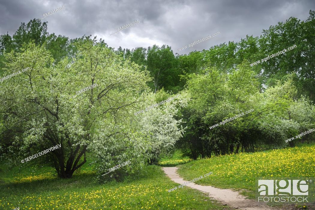 Stock Photo: Path in a blossoming spring park on a cloudy day before the rain.