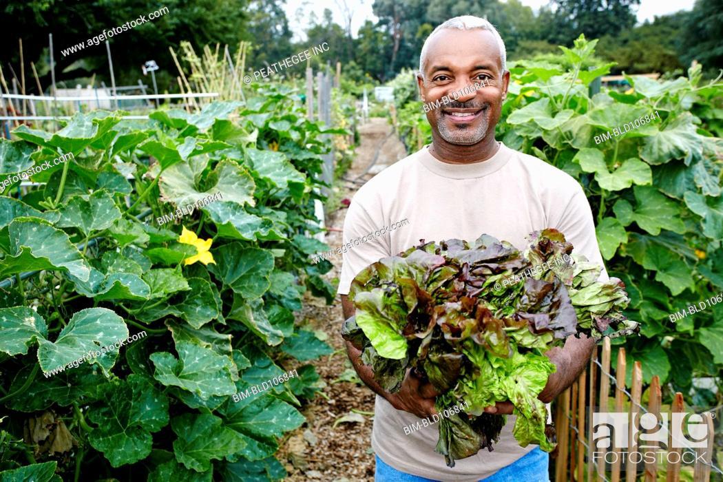 Stock Photo: Black man holding lettuce in community garden.