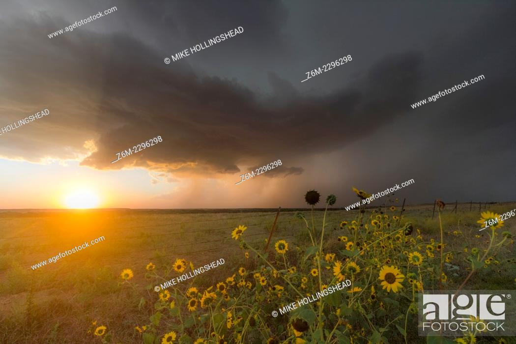Stock Photo: Severe supercell storm drops southeast in northern Kansas as the setting sun shines underneath.