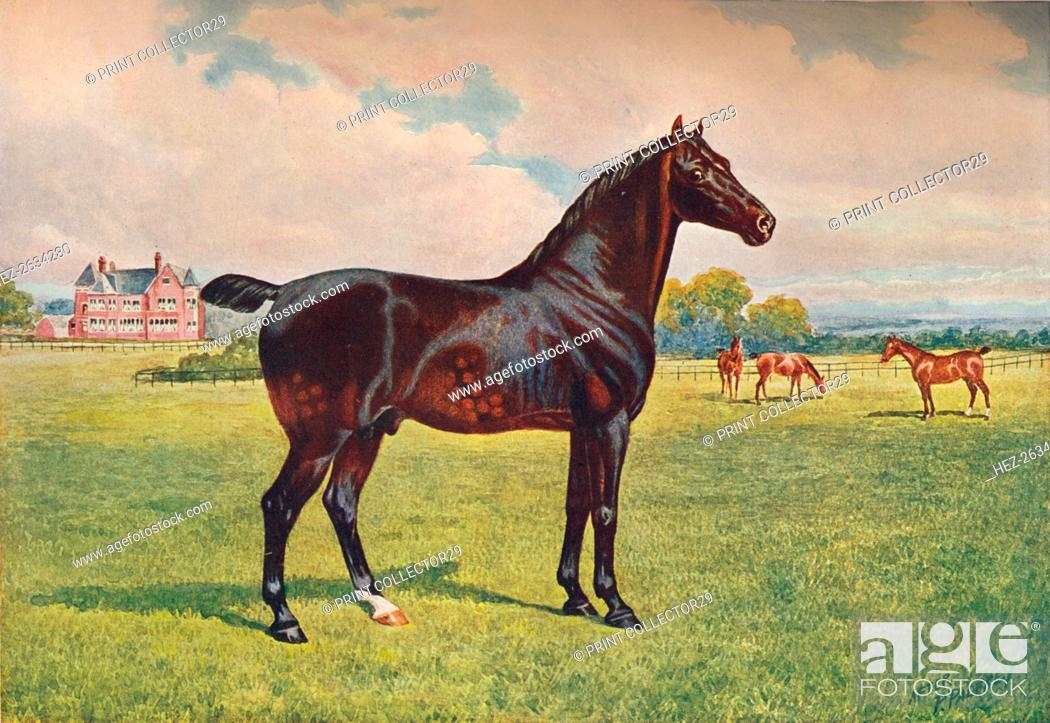 Stock Photo: Hackney Pony stallion Berkeley Model, c1900 (c1910). Artist: Henry Powell Palfrey.