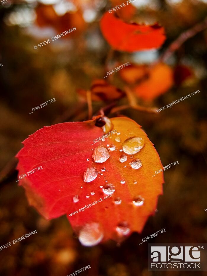 Stock Photo: Hydrated Leaves.