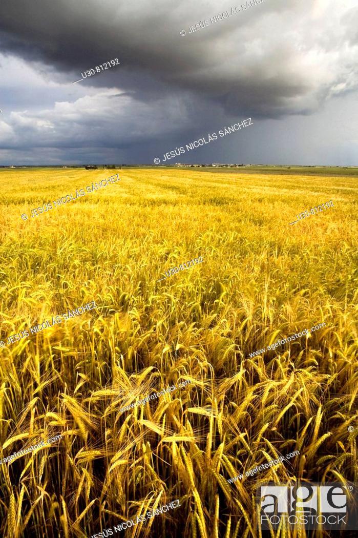 Stock Photo: Summer storm on a landscape of cereal crops  Arcediano  Salamanca province  Castilla y Leon  Spain.
