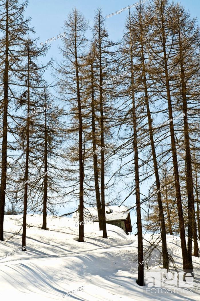 Stock Photo: Chamois Aosta, Italy.
