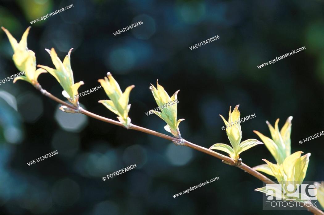 Stock Photo: Spring Branch.