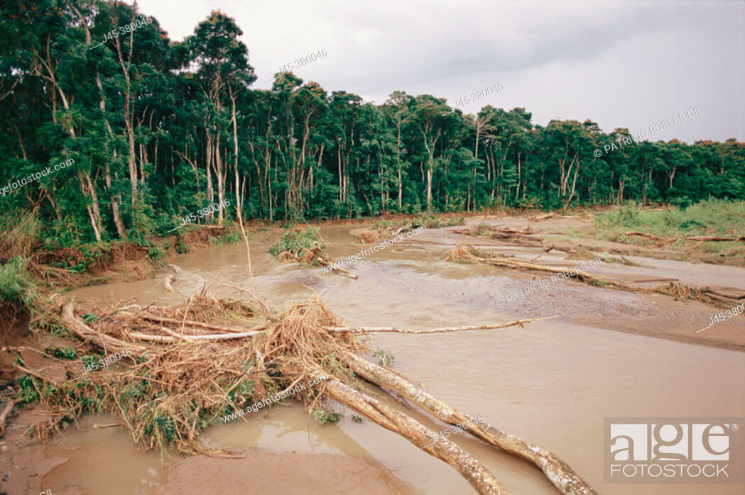 Stock Photo: Flooding and forest degradation. New Britain. Papua New Guinea.
