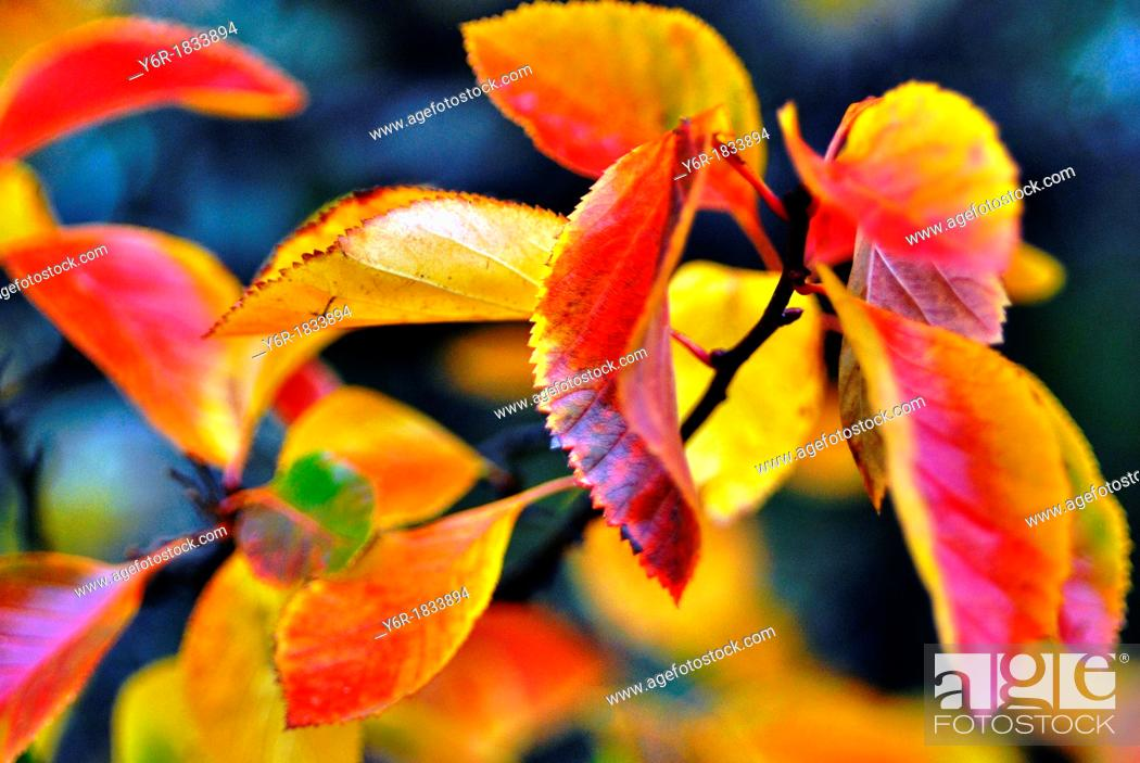 Stock Photo: Fall / Autumn leaves in London, England.
