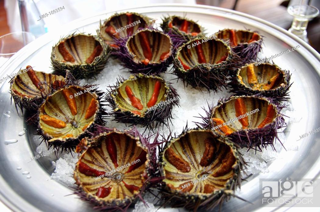 Photo de stock: Sea Urchins  Palamós  Costa Brava  Catalunya  Spain.